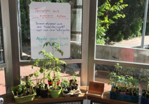 Südafrika-AG eröffnet Jungpflanzenbasar
